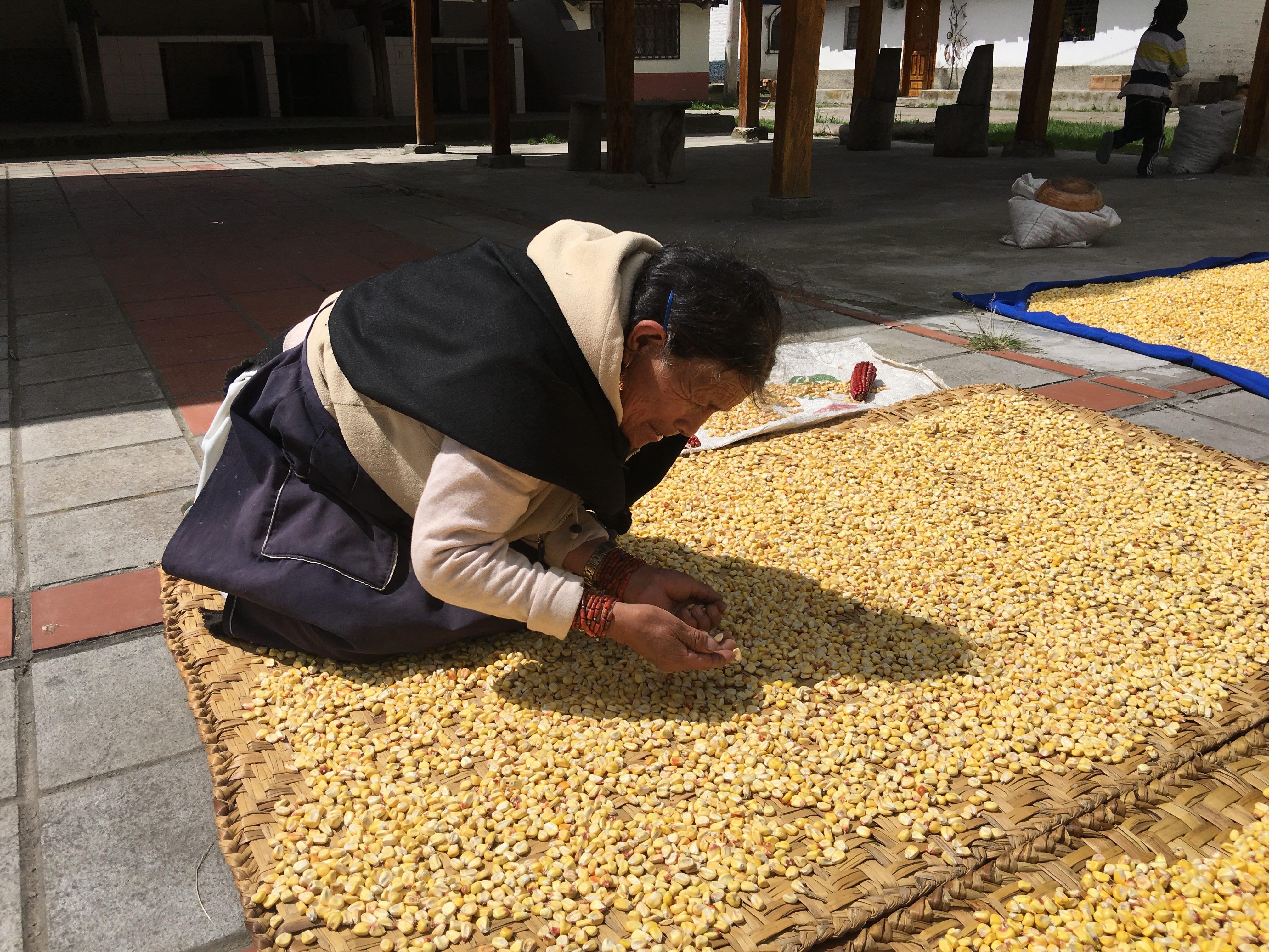corn-kernels
